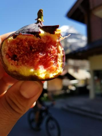 Fruit in Murren. I love fruit from the markets.